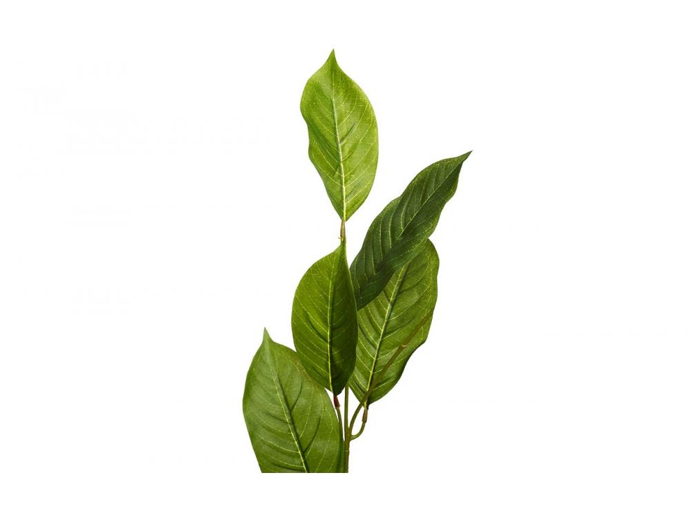 Листья жакаранды